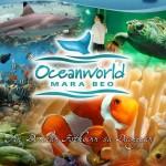 OceanWorld, Dingle