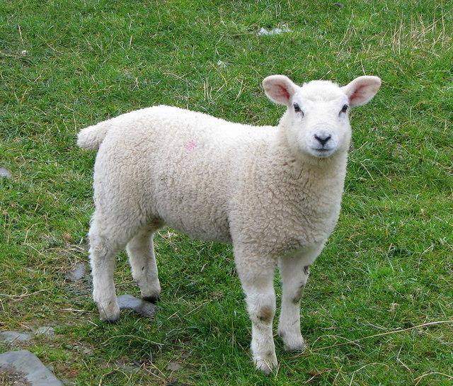z-sheepfarm