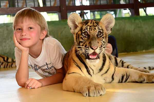 child-with-a-tiger