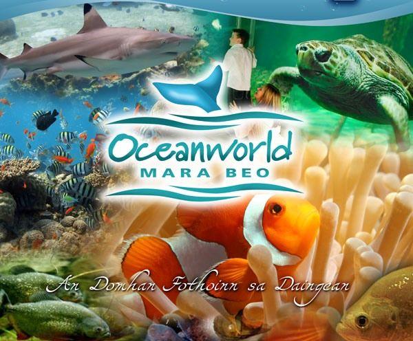 oceandingle