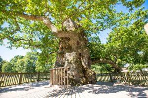 Foret de Paimpot Brittany